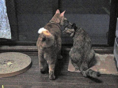 2010-02-19_1189_miyan-tyako.jpg