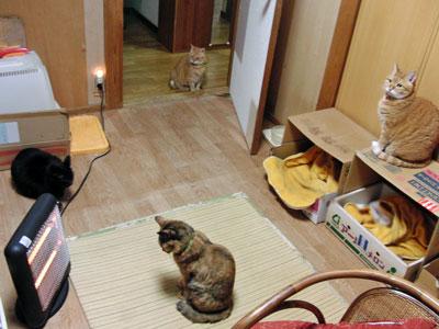 2011-12-10_9523.jpg