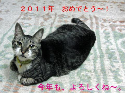 2011.1.1-2010-12-03_3842.jpg