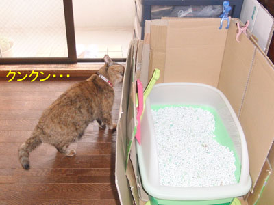 2mi-yan-toire2010-11-23_380.jpg