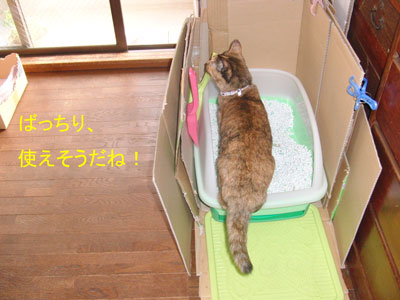 4mi-yan-toire2010-11-23_380.jpg