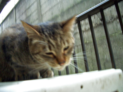 6syokuji2008.3.1-036.jpg