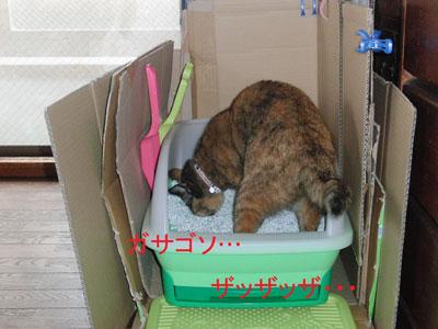 7mi-yan-toire2010-11-23_380.jpg