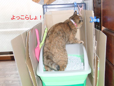 9mi-yan-toire2010-11-23_381.jpg
