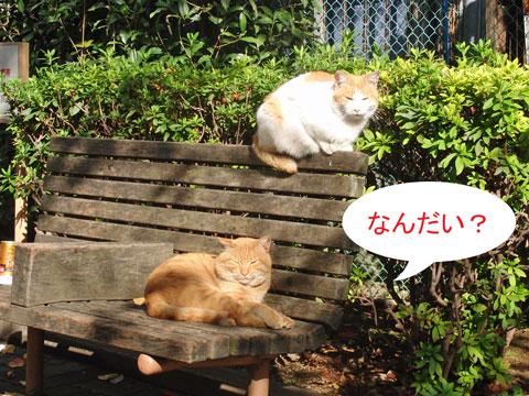 公園猫たち2010-11-23_3800.jpg