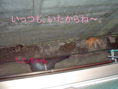猫道夕方ノンちゃんら2010-09.jpg