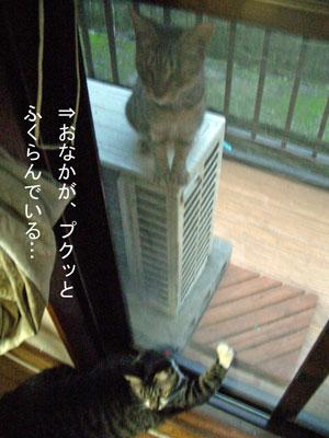 ninsin2008.10.12-010.jpg