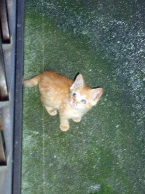 tyatora-koneko2008.10.12-07.jpg